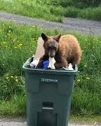 bear trash can